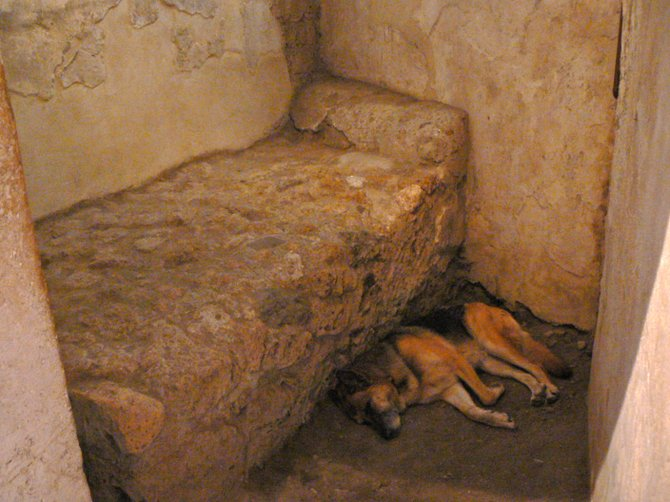 Dog in the Brothel, Pompei, Italy.