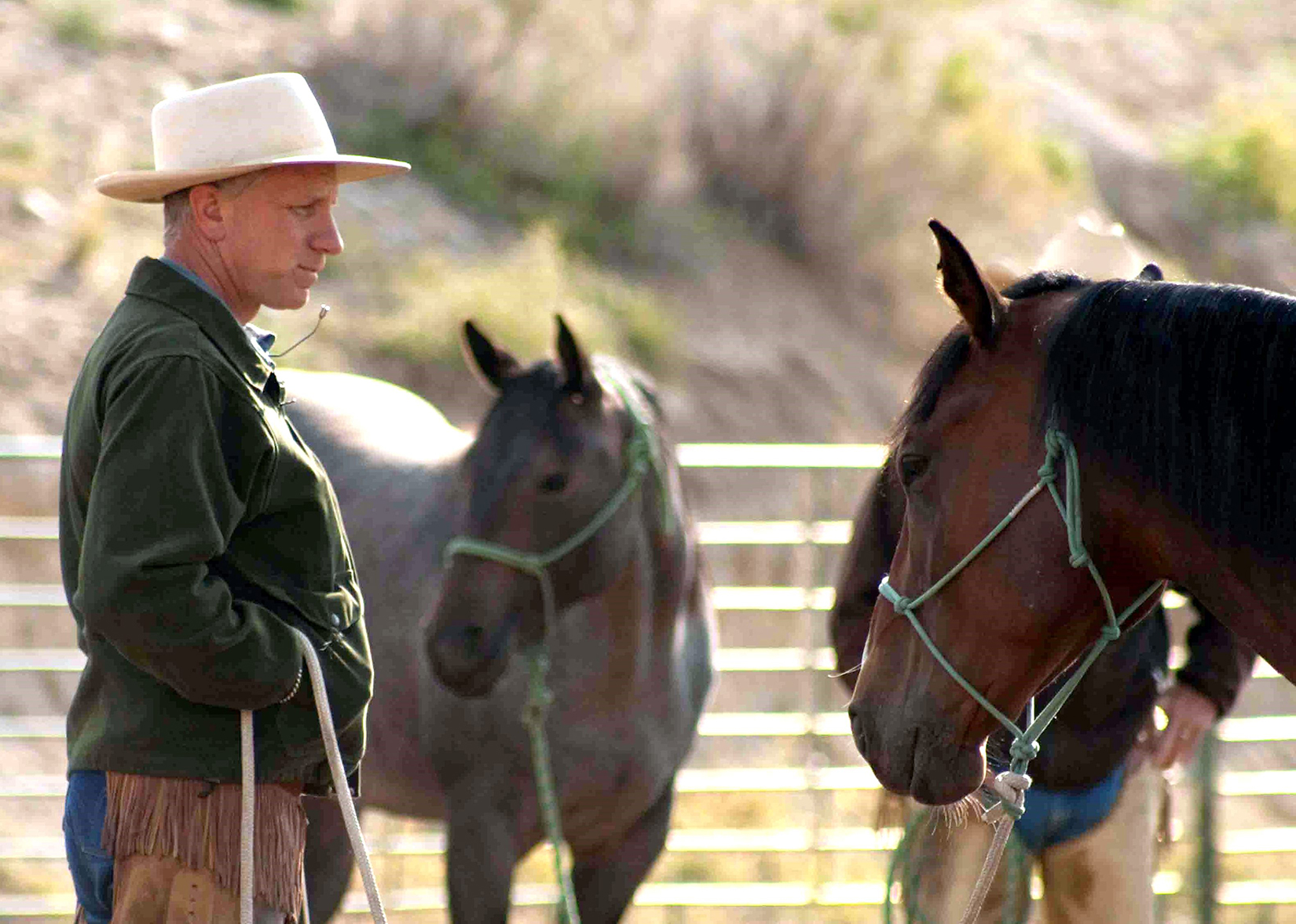 Buck, the Equine Hero   San Diego Reader