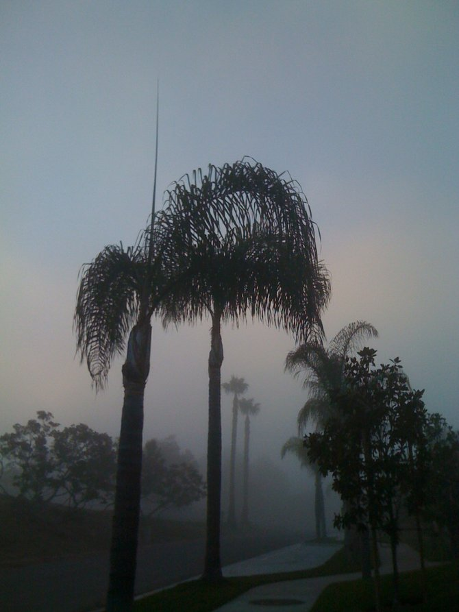 Photo taken with an iPhone camera at about 6:15 AM on a foggy July morning