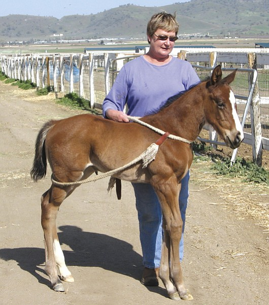 """Priscilla Clark runs a horse retirement farm.  """"I've seen the most dastardly things, the most  flagrant abuse. Anybody can see it. It's not hidden."""""""