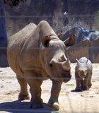 San Diego Zoo Wild Animal Park Safari Park