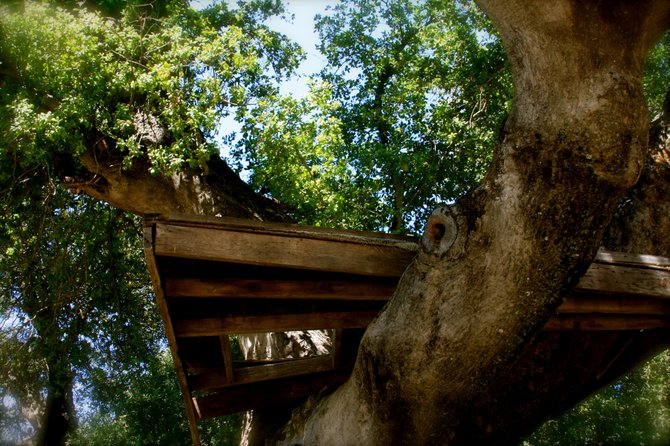 An abandoned tree house found on one of the many beautiful mountain rhodes of Pine Valley!