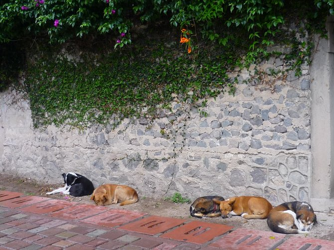 Let sleeping dogs lie. Xela, Guatamala.