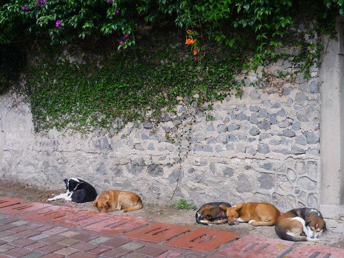 Let sleeping dogs lie. Xela, Guatamala.