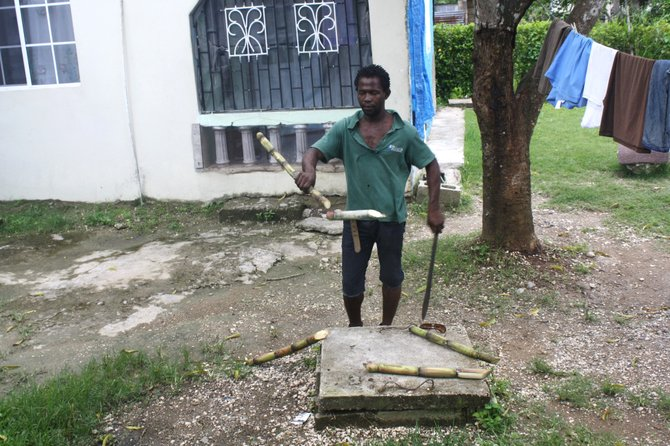 A man in St. Catherine, Jamaica, cuts up a sugar cane for his children using his machete.