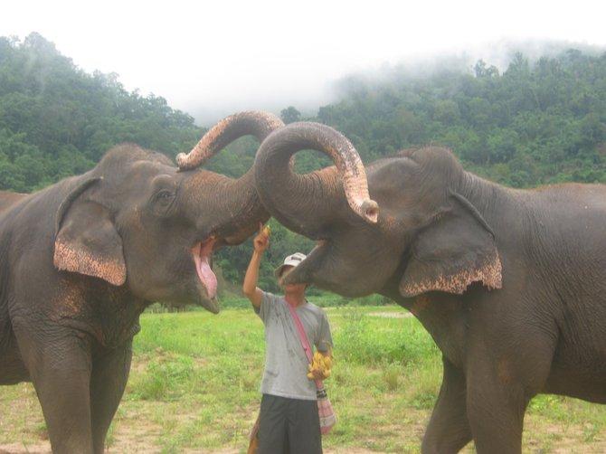 Feeding the elephants