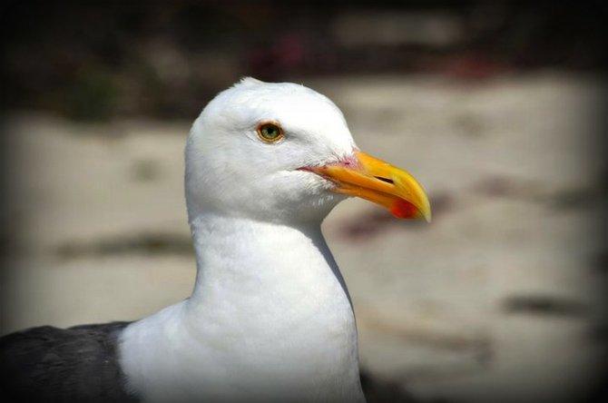 Seagull stare.