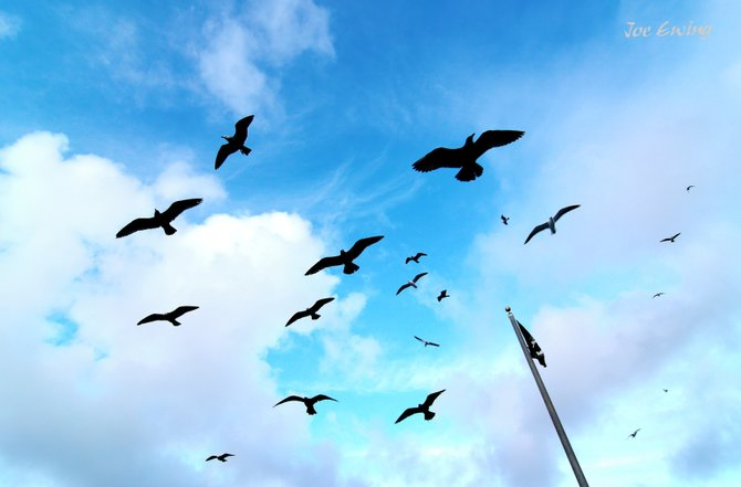Seagulls motionless in the winter breeze