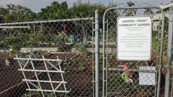 The 30-year-old Juniper-Front Community Garden at 2260 Front Street, in Park West/Bankers Hill. There's a waiting list to get a plot. (Front.Juniper.Garden@gmail.com)
