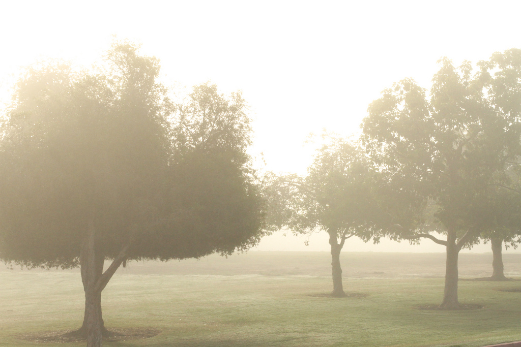 I took a bunch of pictures in the fog this morning. I favor this one.