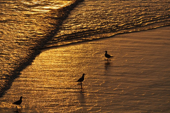 Golden sunset at Rosarito, Mexico