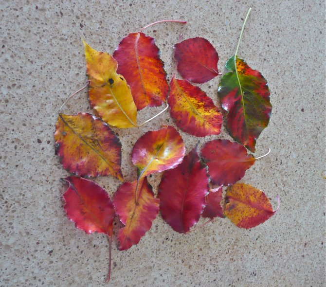 Even the leaves are artistic on Ray St.  The place to experience  Art in San Diego!  92104 says it all The Place to be, in the Fall