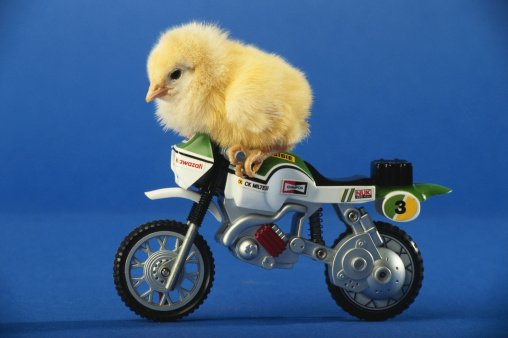 Motorcycle chicken