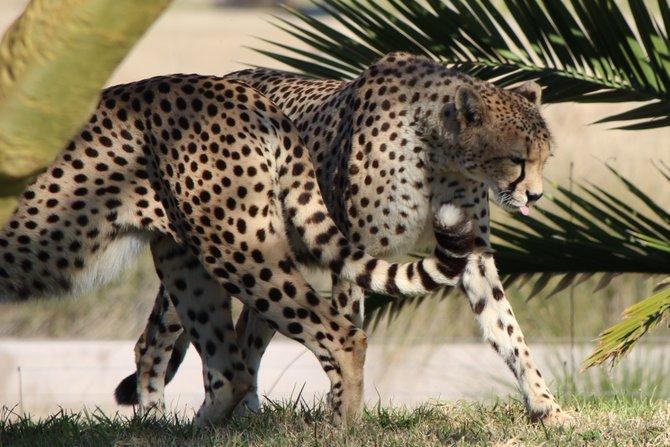 Wild Animal Park in Escondido.