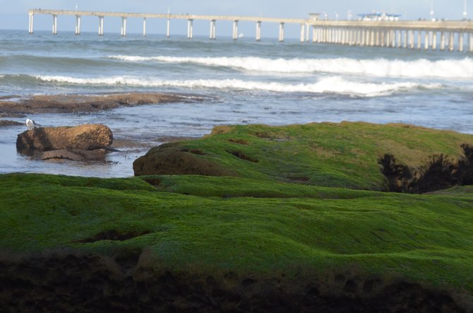 View of the Ocean Beach Pier from the tidepools, as the fog burned off...
