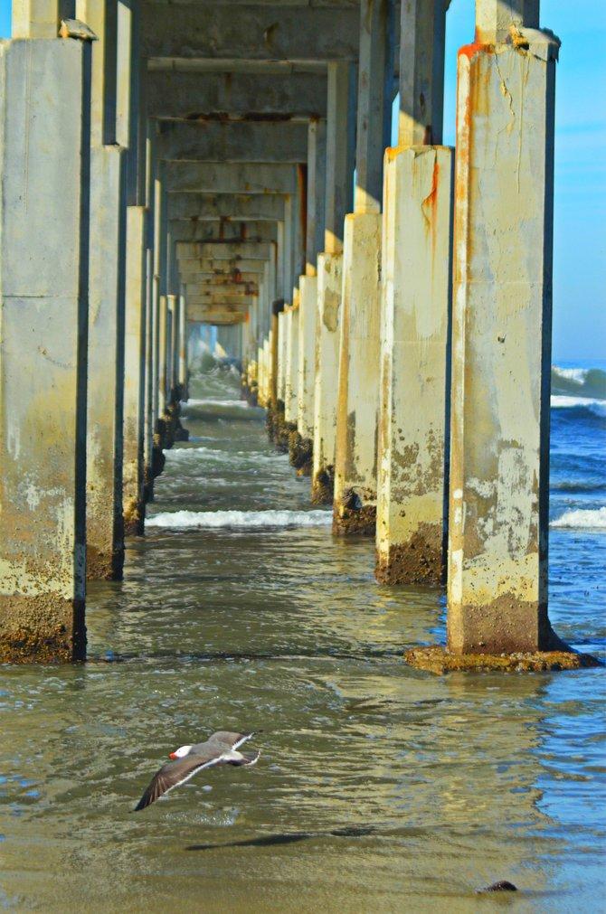 Ocean Beach Pier at low tide