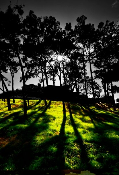 What was intended to be a La Jolla coastline photo ended up being this unique image of the morning sun shining through a stand of pine trees east of the viewpoint over looking The Clam. La Jolla Ca.