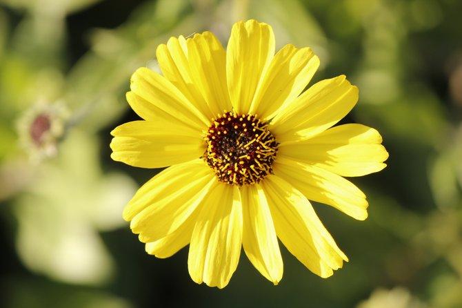 Imperial Beach Estuary Flower