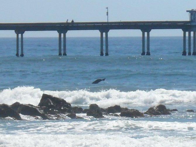ocean beach. dolphin.