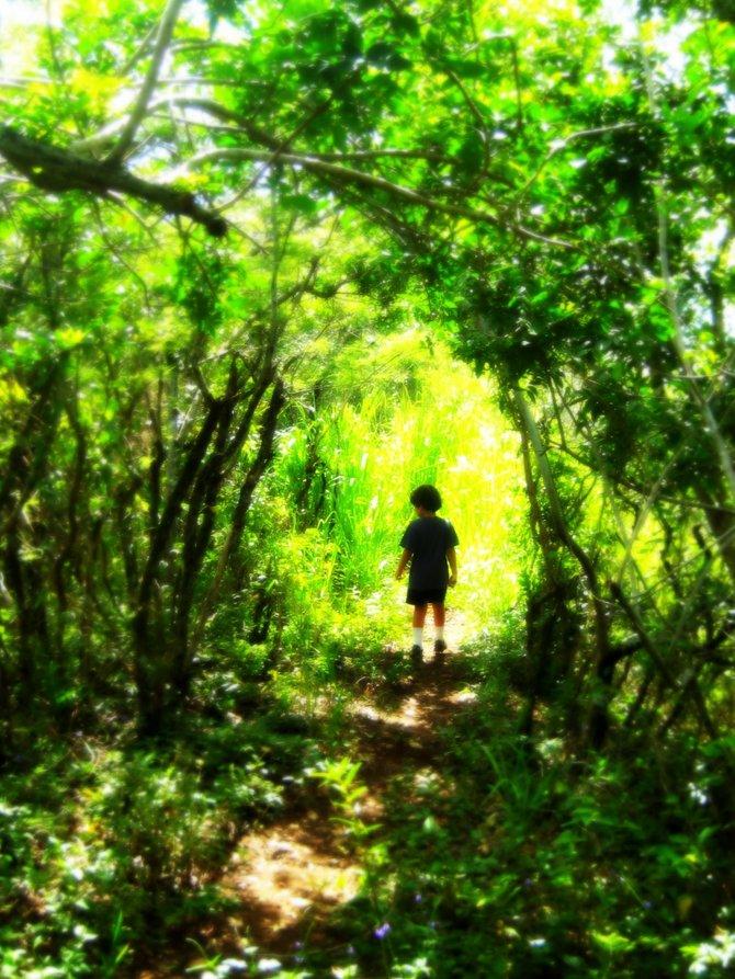 Friendship Gardens Hike: Kaneohe Bay, HI