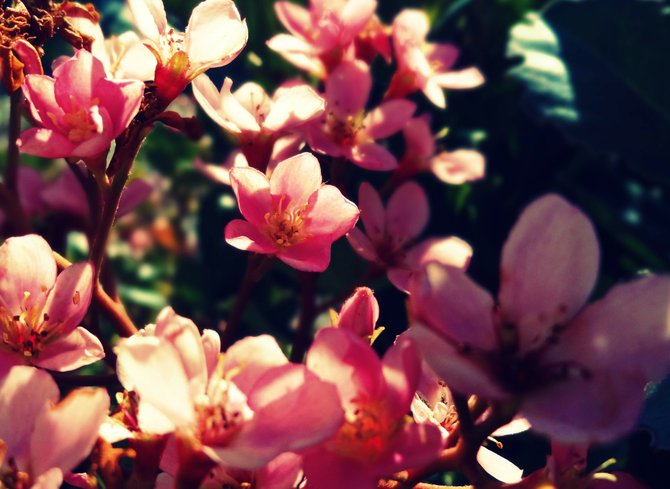 Backyard Garden: San Diego, CA