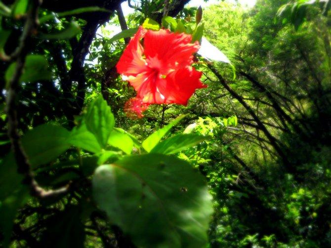 Friendship Gardens: Kaneohe Bay, HI