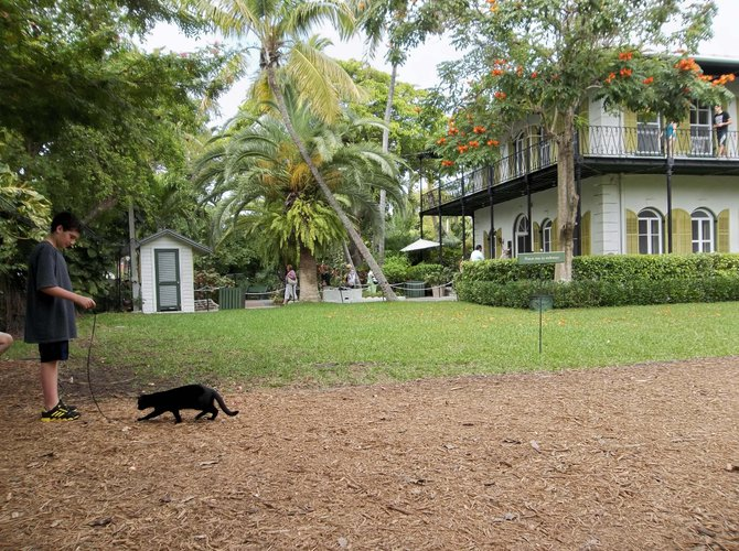 A boy plays with one of the descendants of Ernest Hemingway's six toed cat at the Hemingway House in Key West, Florida.