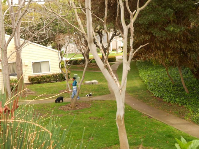 Dog walker (with leashed pets & poop bags!) at Mariner's Cove Apartments!
