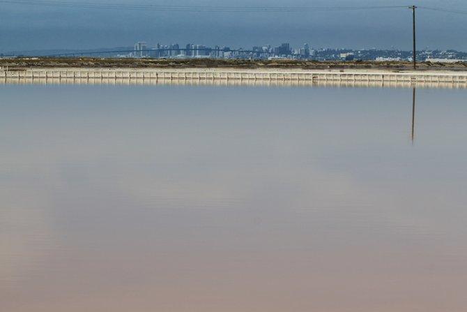 South Bay salt pond.