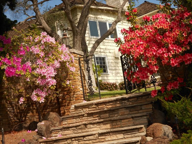 Beautiful blooming azaleas frame entrance to Point Loma mansion off Chatsworth Blvd.
