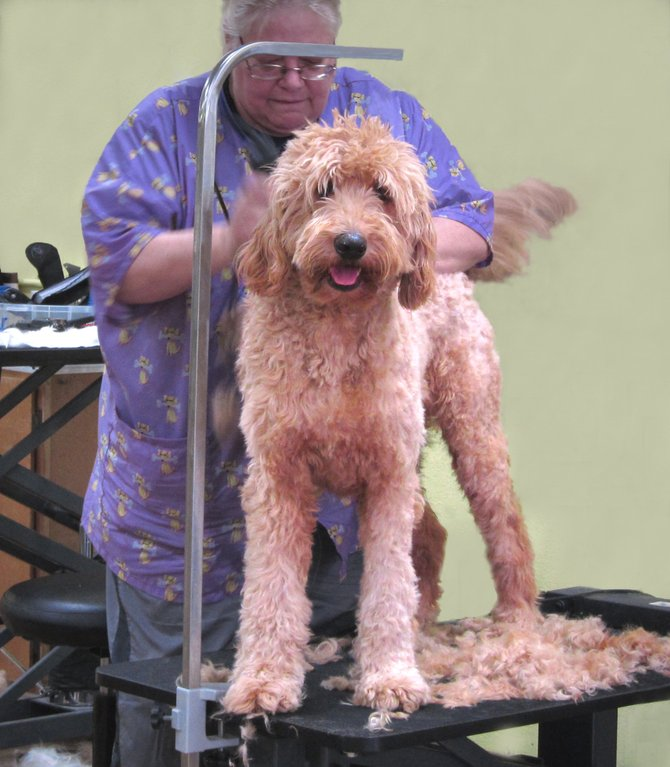 It's haircut day for dogs at the Animal Salon in Rancho Penasquitos.