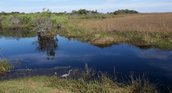 Bird watching from a trail in the Florida Everglades