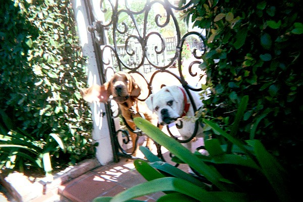 The mailman/dog relationship is no lie. It's like they can smell it on you, a scent that triggers their hunting instinct. But the owners are worse. Opposite of owners who talk to their pets in baby voice are the ones who scold their pets as if they were aristocratic children.