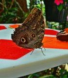 Butterfly Geometry San Diego Safari Park