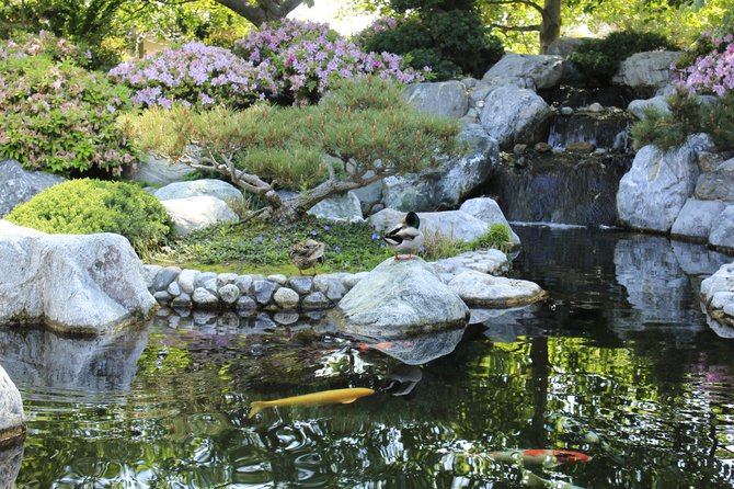 Japanese friendship gardens in balboa park