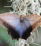 This was taken in Escondido at the San Diego Zoo Safari Park during their Butterfly Jungle.