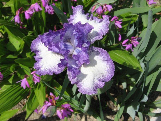 Spring flowers in Oceanside, CA