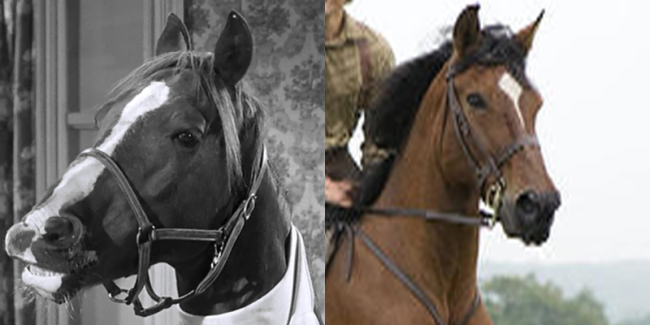 War Horse as Moe, Larry, and Joe's younger sister, Birdie.