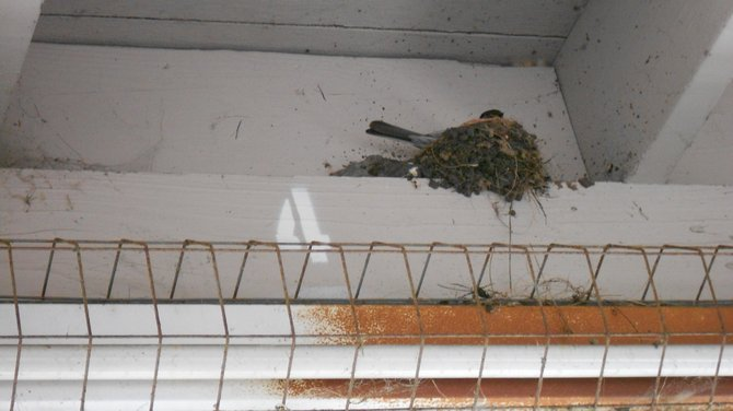 Bird nest in Ocean Beach parking garage.