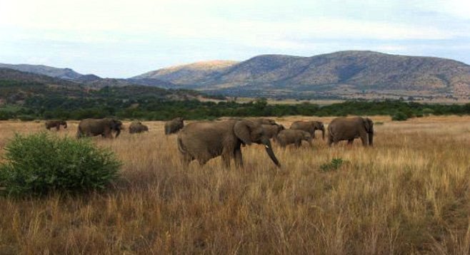 A few of Tarangire National Park's residents