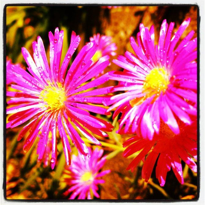 Spring La Costa California