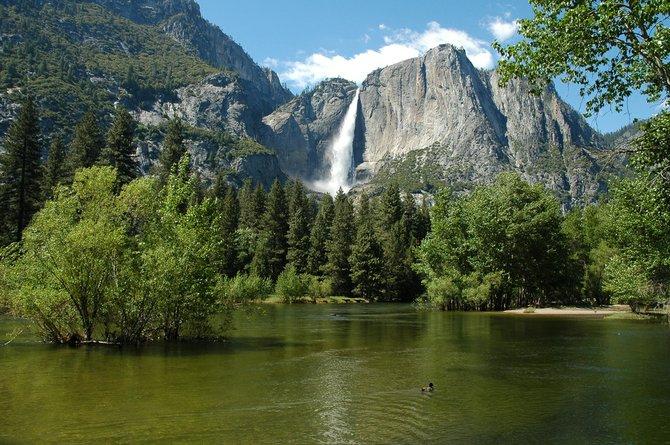 Yosemite Falls and a Duck