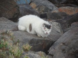One of the feral cats living at Quivera Point.