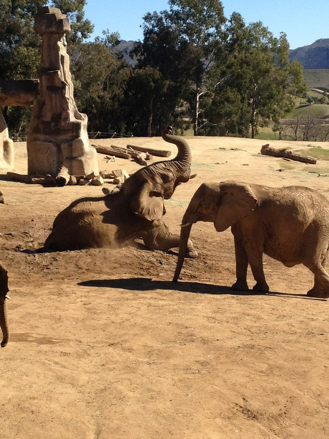 Playing in the DIRT at the Wild Animal Park. Feb. 2012