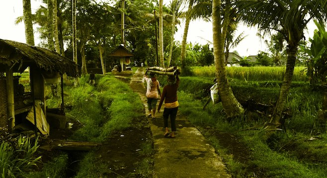 Bali, women transporting bamboo.