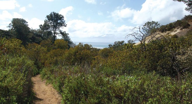 The Daughters of the American Revolution Trail is dotted with gnarled Torrey pine trees, views of Los Peñasquitos Lagoon, and the ocean.