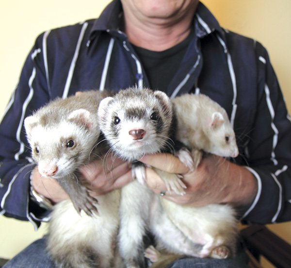 Pat Wright with three of his babies