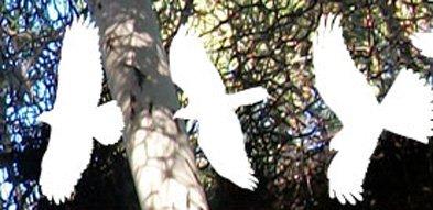 Screen shot from wildlifecenter.org