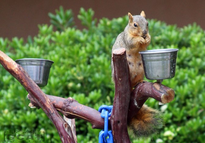 Squirrel! Balboa Park, San Diego