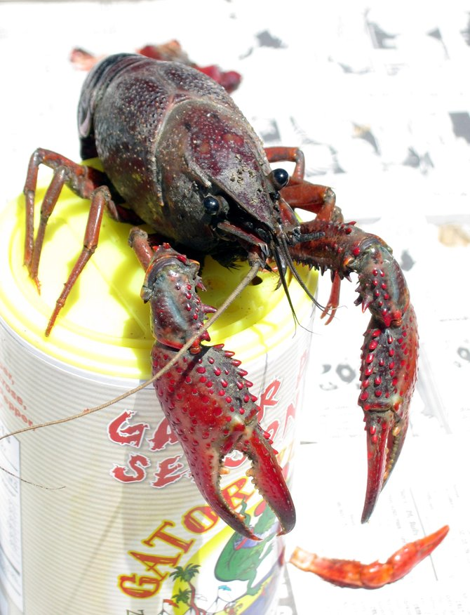 Crayfish anyone?  From the Gator By the Bay on Harbor Island.